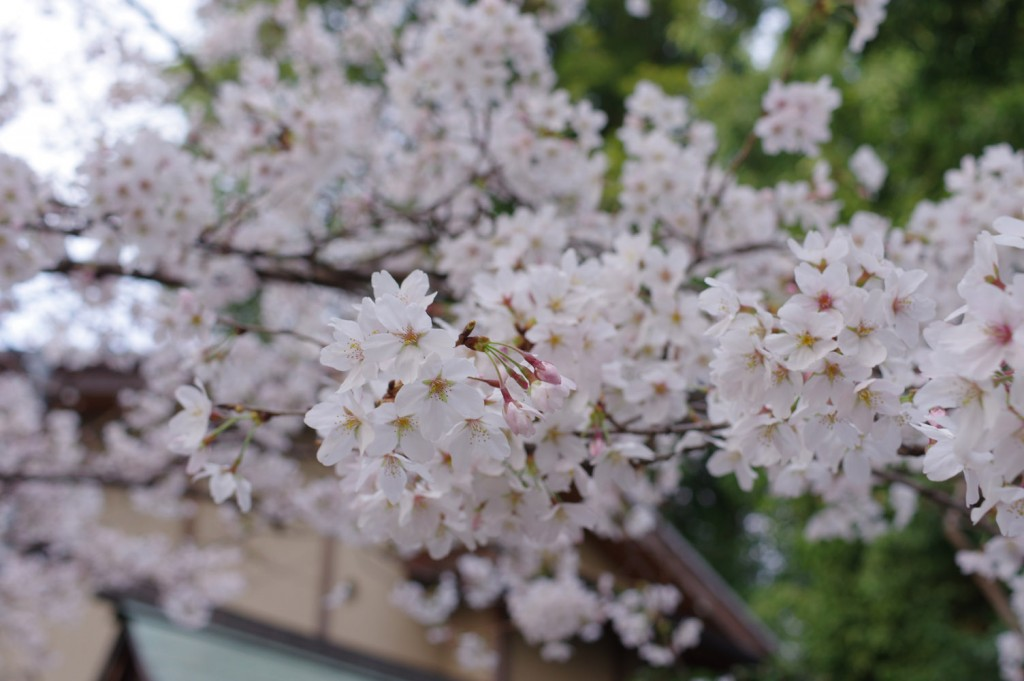 PENTAX K-3 HD DA35mm MacroLimited f/5.6 1/100 ISO-200